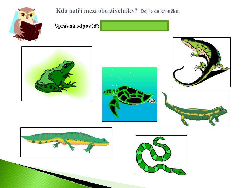 Správná odpověď: žába, mlok, čolek