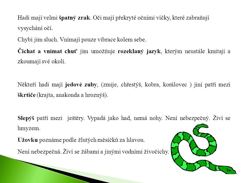 Hadi mají velmi špatný zrak. Oči mají překryté očními víčky, které zabraňují vysychání očí. Chybí jim sluch. Vnímají pouze vibrace kolem sebe. Čichat