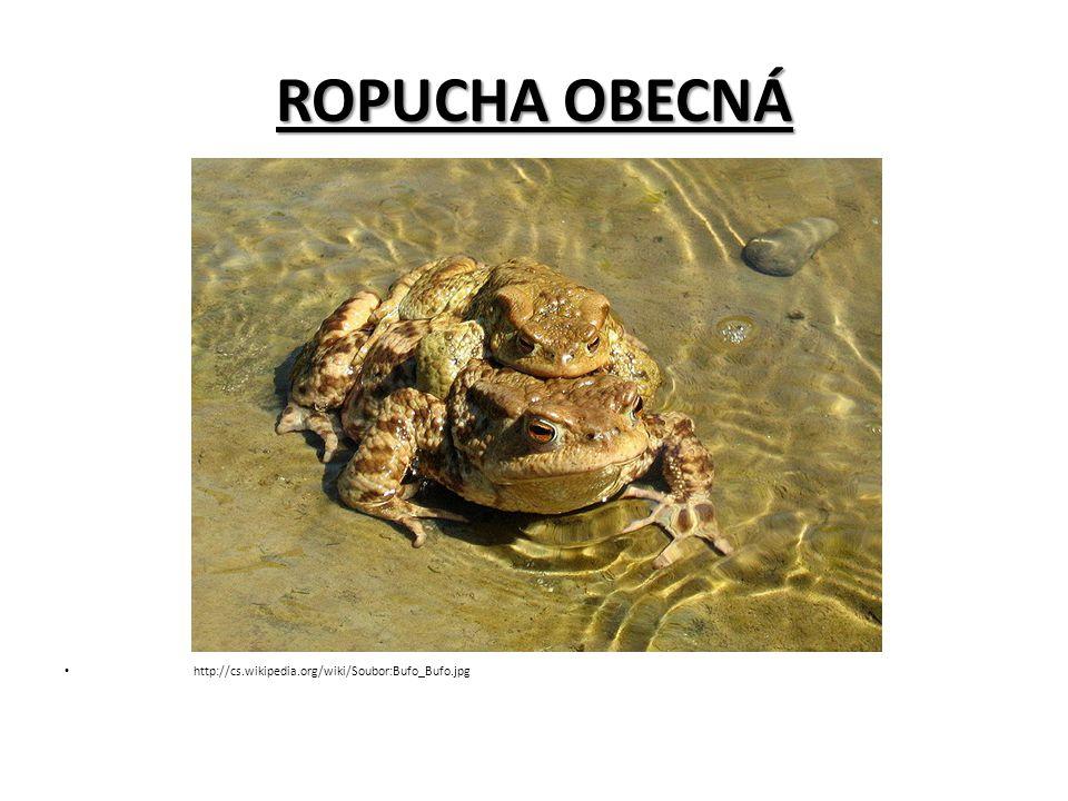 ROPUCHA OBECNÁ http://cs.wikipedia.org/wiki/Soubor:Bufo_Bufo.jpg