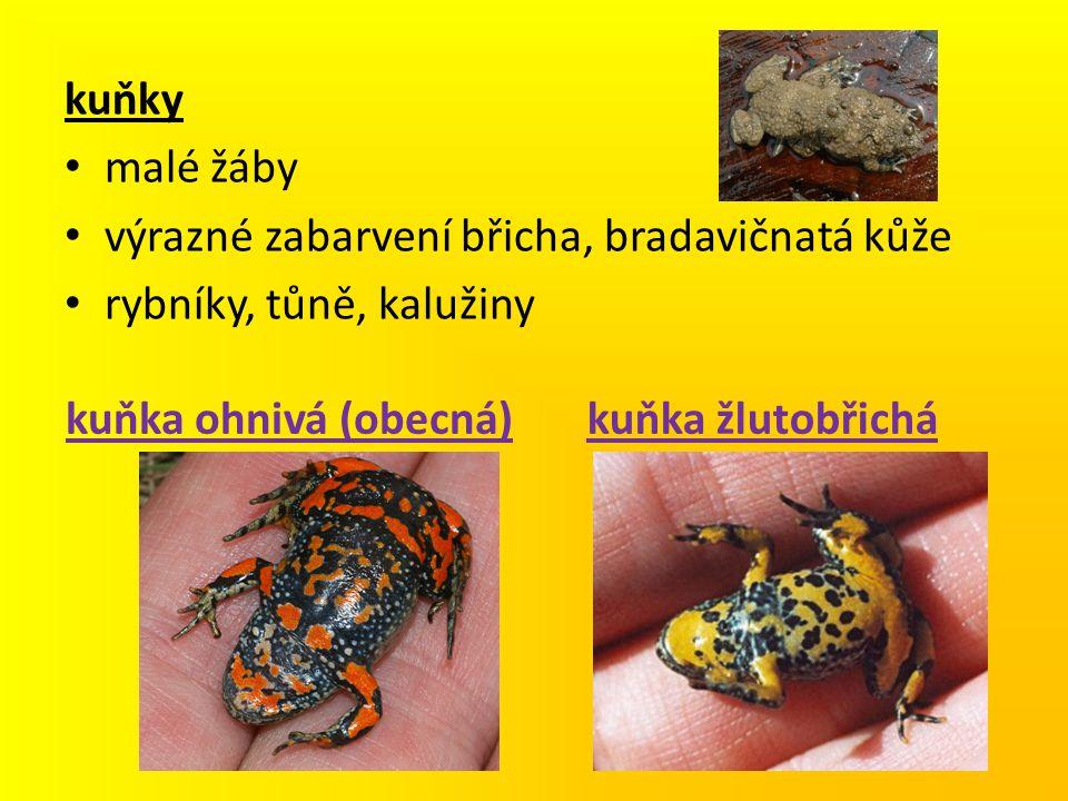 kuňky malé žáby výrazné zabarvení břicha, bradavičnatá kůže rybníky, tůně, kalužiny kuňka ohnivá (obecná)kuňka žlutobřichá