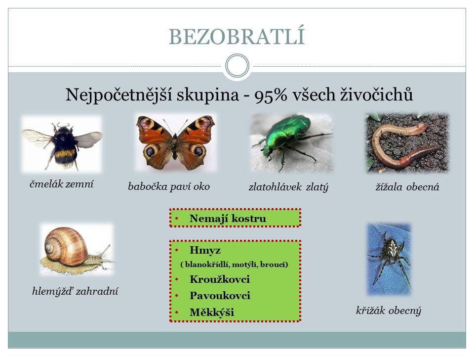 BEZOBRATLÍ Nejpočetnější skupina - 95% všech živočichů Hmyz ( blanokřídlí, motýli, brouci) Kroužkovci Pavoukovci Měkkýši čmelák zemní babočka paví oko