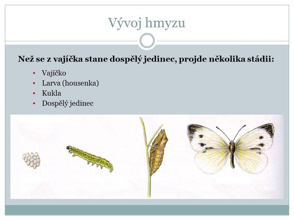 Vývoj hmyzu Než se z vajíčka stane dospělý jedinec, projde několika stádii: Vajíčko Larva (housenka) Kukla Dospělý jedinec