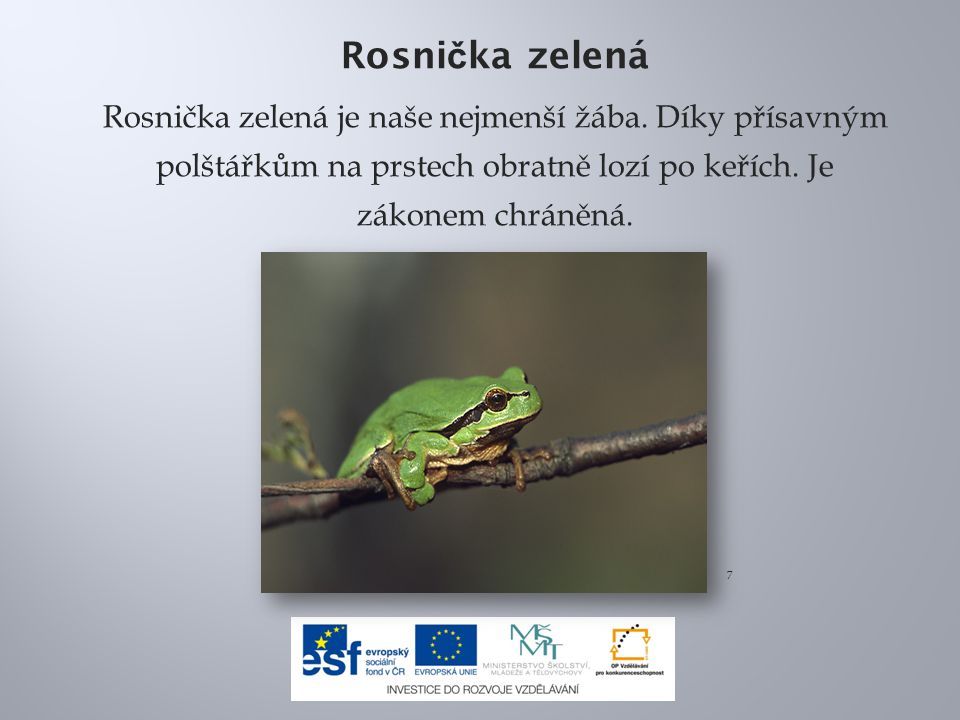 Rosni č ka zelená Rosnička zelená je naše nejmenší žába. Díky přísavným polštářkům na prstech obratně lozí po keřích. Je zákonem chráněná. 7