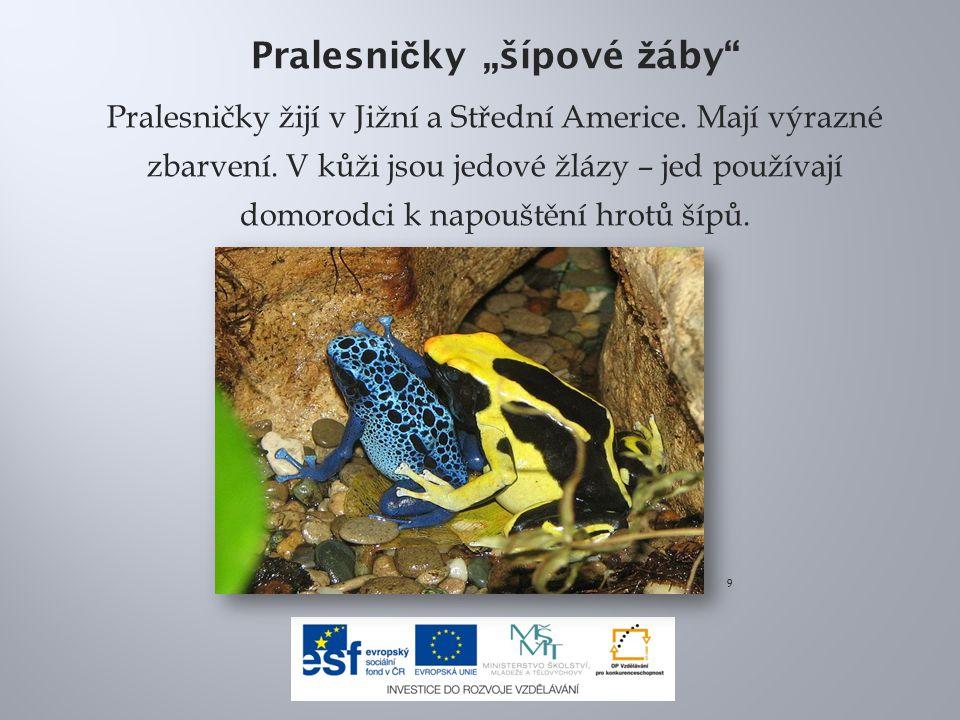 """Pralesni č ky """"šípové ž áby Pralesničky žijí v Jižní a Střední Americe."""