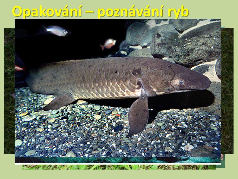 Opakování – poznávání ryb