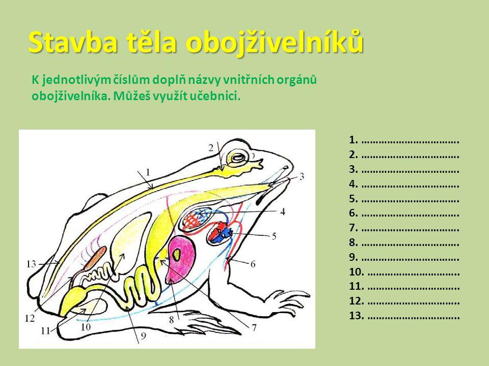 Stavba těla obojživelníků K jednotlivým číslům doplň názvy vnitřních orgánů obojživelníka. Můžeš využít učebnici. 1. ……………………………. 2. ……………………………. 3. …