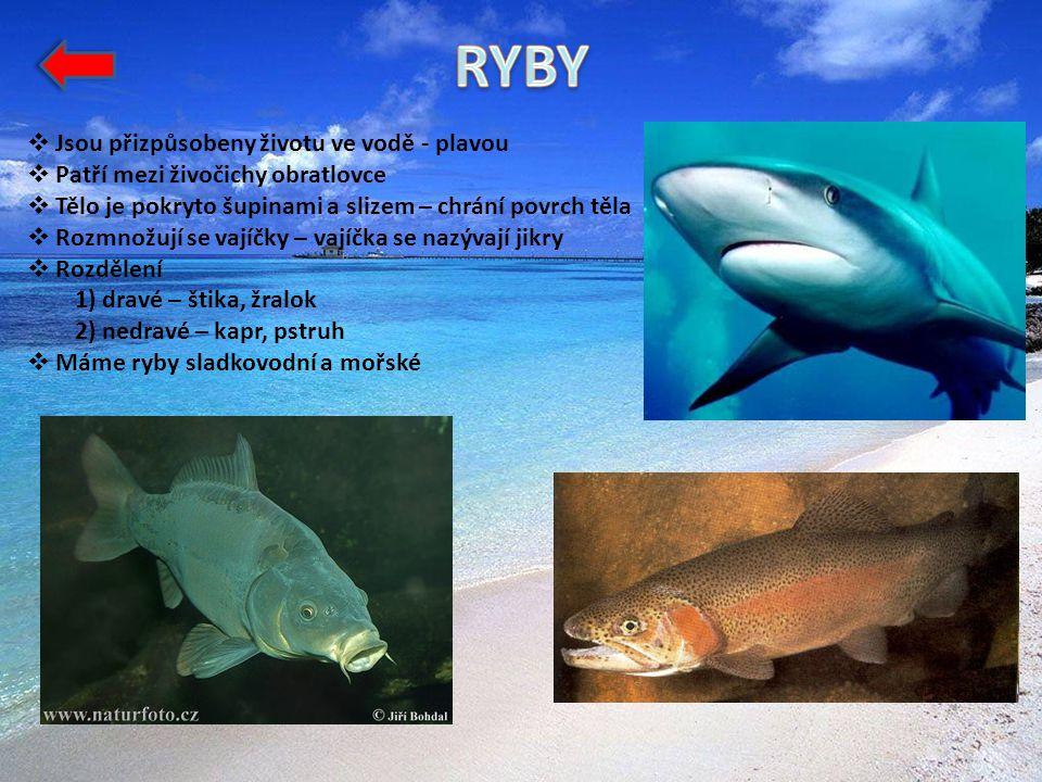  Jsou přizpůsobeny životu ve vodě - plavou  Patří mezi živočichy obratlovce  Tělo je pokryto šupinami a slizem – chrání povrch těla  Rozmnožují se vajíčky – vajíčka se nazývají jikry  Rozdělení 1) dravé – štika, žralok 2) nedravé – kapr, pstruh  Máme ryby sladkovodní a mořské