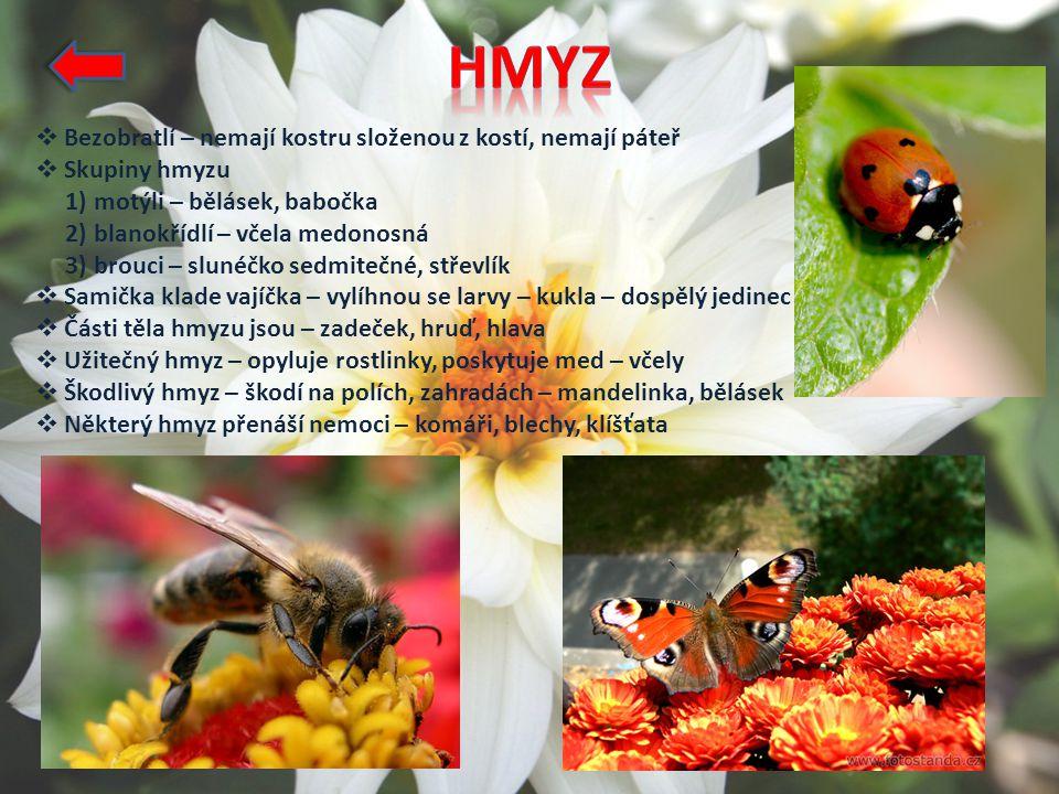  Bezobratlí – nemají kostru složenou z kostí, nemají páteř  Skupiny hmyzu 1) motýli – bělásek, babočka 2) blanokřídlí – včela medonosná 3) brouci – slunéčko sedmitečné, střevlík  Samička klade vajíčka – vylíhnou se larvy – kukla – dospělý jedinec  Části těla hmyzu jsou – zadeček, hruď, hlava  Užitečný hmyz – opyluje rostlinky, poskytuje med – včely  Škodlivý hmyz – škodí na polích, zahradách – mandelinka, bělásek  Některý hmyz přenáší nemoci – komáři, blechy, klíšťata
