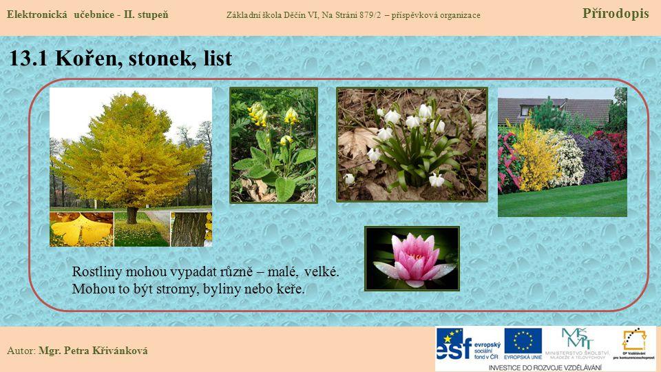 13.2 Co už víš o stavbě rostlinného těla.Elektronická učebnice - II.