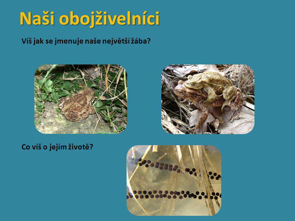Víš jak se jmenuje naše největší žába? Co víš o jejím životě? Naši obojživelníci