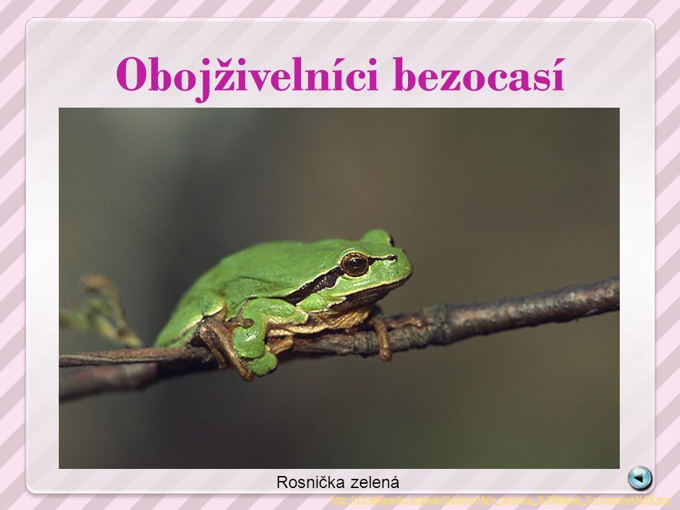 Obojživelníci bezocasí http://cs.wikipedia.org/wiki/Soubor:Hyla_arborea_%28Marek_Szczepanek%29.jpg Rosnička zelená