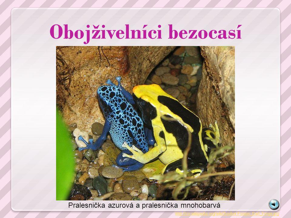 Obojživelníci bezocasí http://cs.wikipedia.org/wiki/Soubor:Poison_Dart_Frogs.jpg Pralesnička azurová a pralesnička mnohobarvá