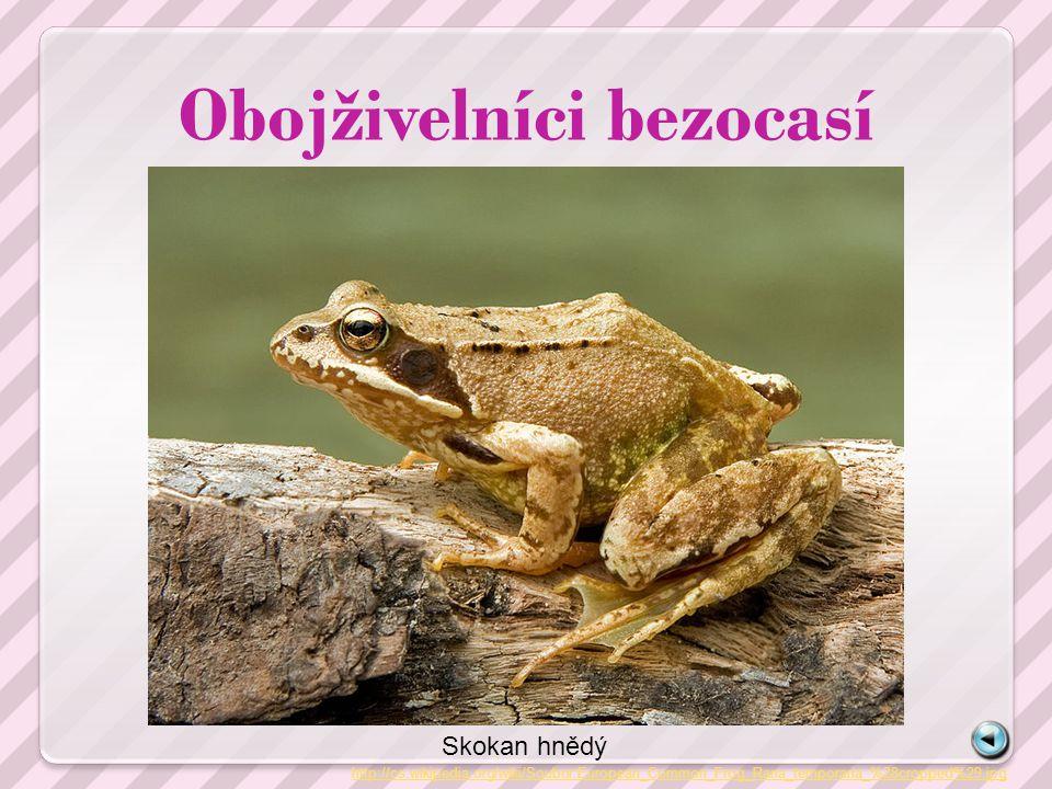 Obojživelníci bezocasí http://cs.wikipedia.org/wiki/Soubor:European_Common_Frog_Rana_temporaria_%28cropped%29.jpg Skokan hnědý