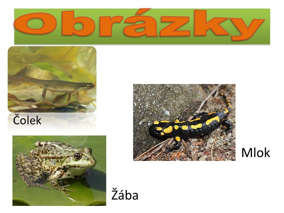 Žába Čolek Mlok