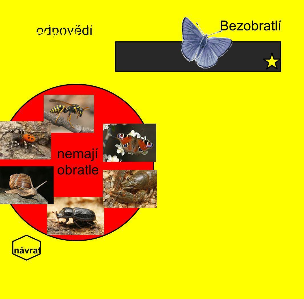 odpovědi Bezobratlí Bezobratlí nemají vnitřní kostru, obratle. Mezi bezobratlé patří hmyz(včela, brouk), hlemýžď,rak, pavouk. nemají obratle návrat