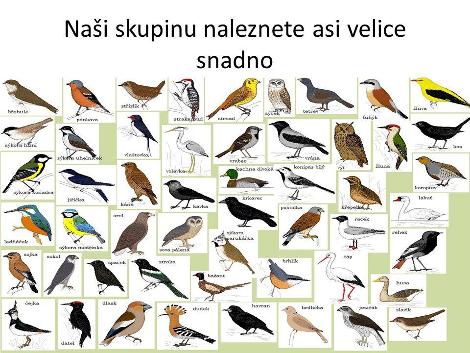Ptáci Čím je pokryté naše tělo.Jak máme uzpůsobené končetiny k letu.
