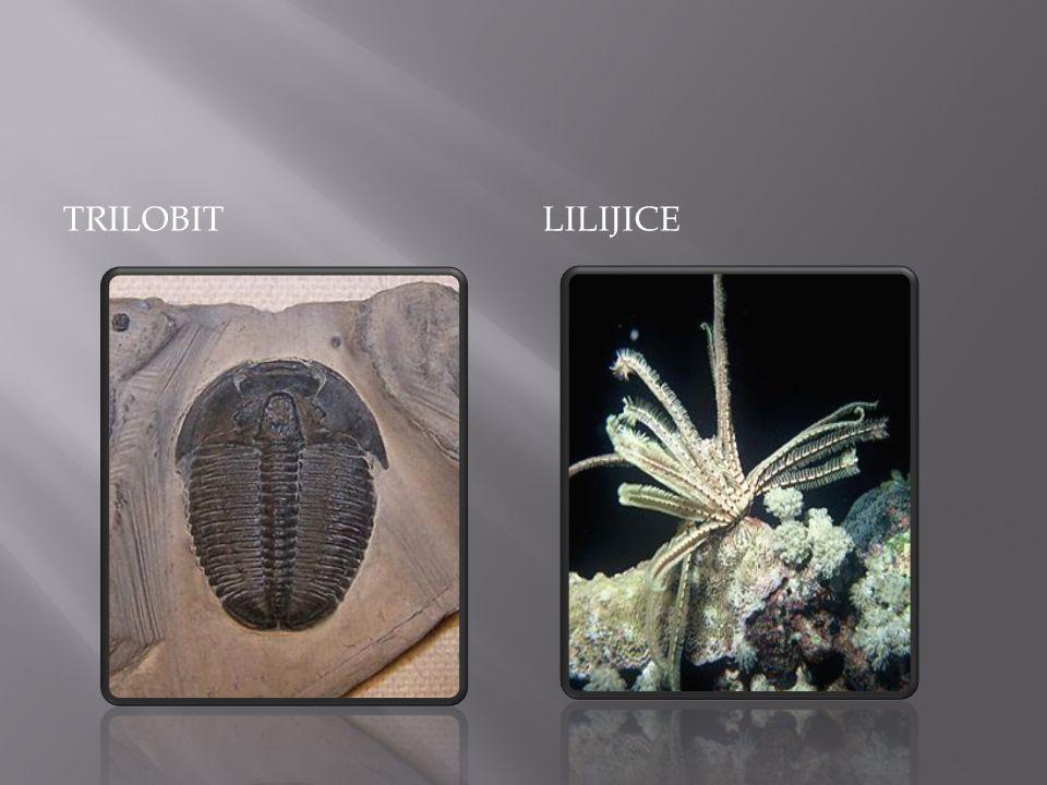  Život převážně v mořích  Koráli, graptoliti  Rybovití praobratlovci  Cévnaté výtrusné rostliny