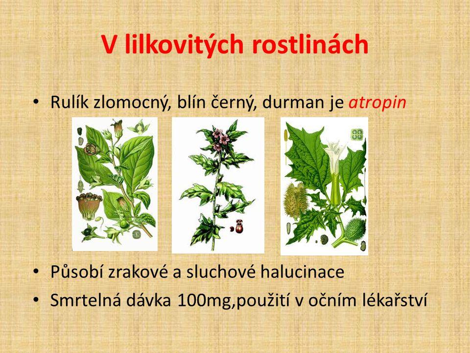V lilkovitých rostlinách Rulík zlomocný, blín černý, durman je atropin Působí zrakové a sluchové halucinace Smrtelná dávka 100mg,použití v očním lékařství