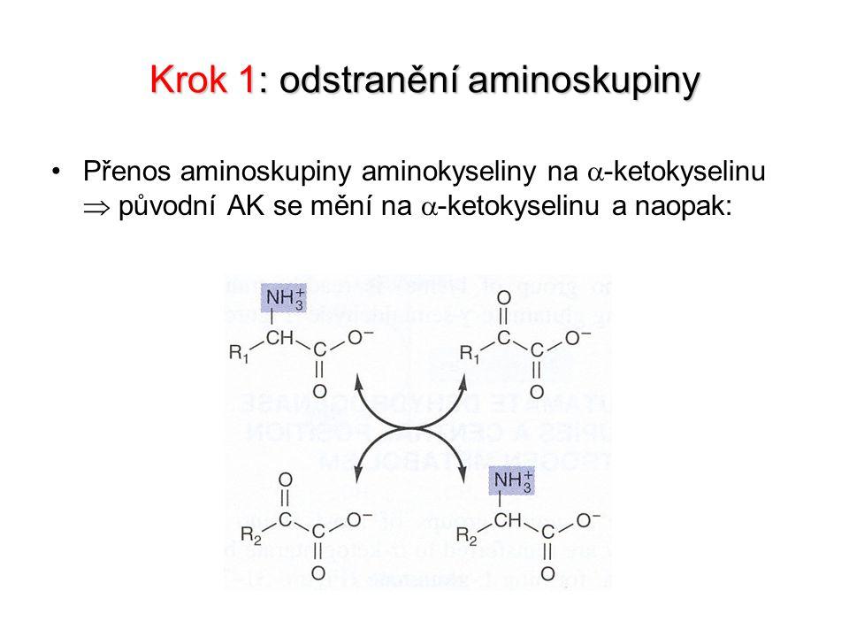 Krok 1: odstranění aminoskupiny Přenos aminoskupiny aminokyseliny na  -ketokyselinu  původní AK se mění na  -ketokyselinu a naopak: