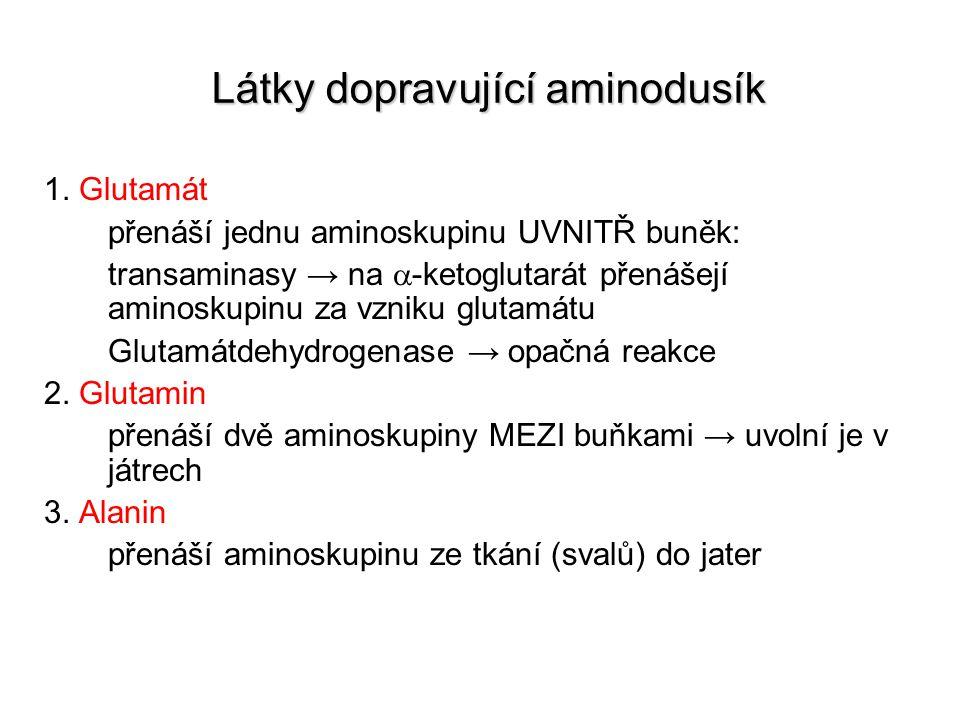 1. Glutamát přenáší jednu aminoskupinu UVNITŘ buněk: transaminasy → na  -ketoglutarát přenášejí aminoskupinu za vzniku glutamátu Glutamátdehydrogenas
