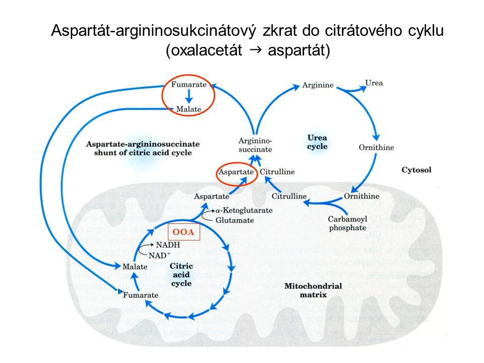 OOA Aspartát-argininosukcinátový zkrat do citrátového cyklu (oxalacetát  aspartát)