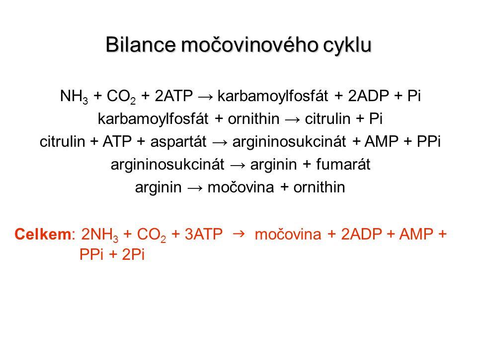 Bilance močovinového cyklu NH 3 + CO 2 + 2ATP → karbamoylfosfát + 2ADP + Pi karbamoylfosfát + ornithin → citrulin + Pi citrulin + ATP + aspartát → arg