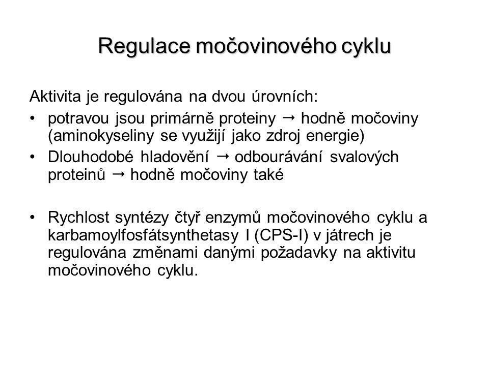 Regulace močovinového cyklu Aktivita je regulována na dvou úrovních: potravou jsou primárně proteiny  hodně močoviny (aminokyseliny se využijí jako z