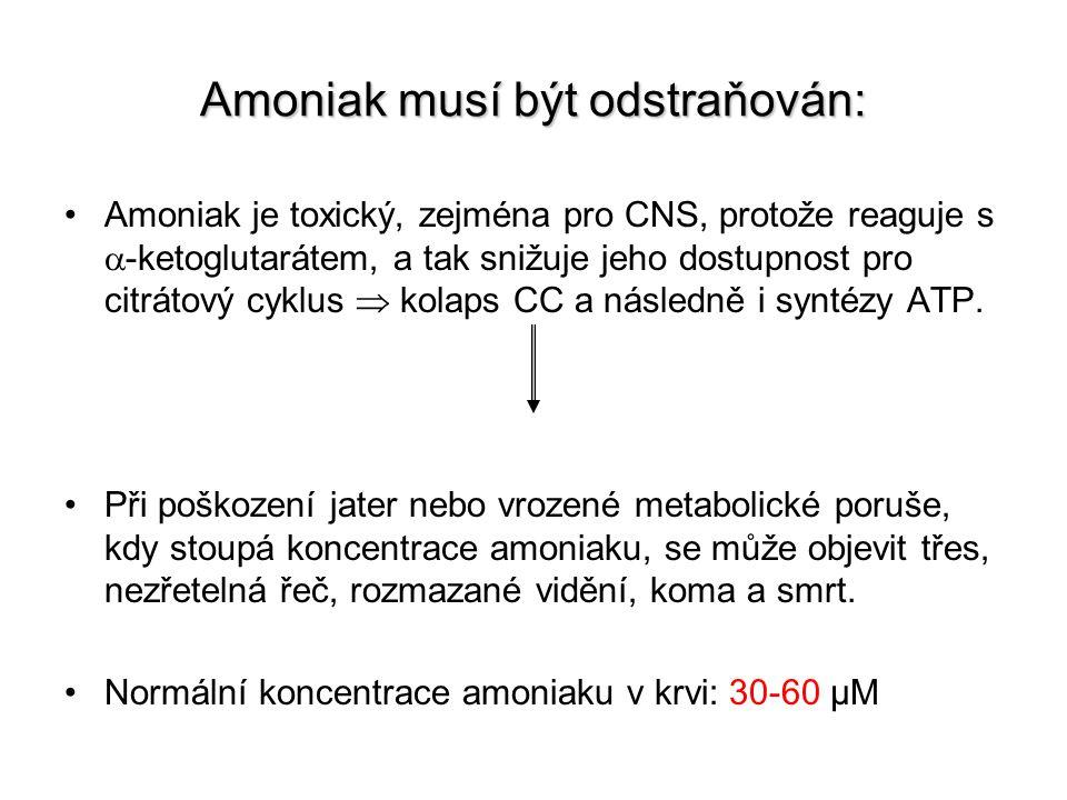 Amoniak musí být odstraňován: Amoniak je toxický, zejména pro CNS, protože reaguje s  -ketoglutarátem, a tak snižuje jeho dostupnost pro citrátový cy