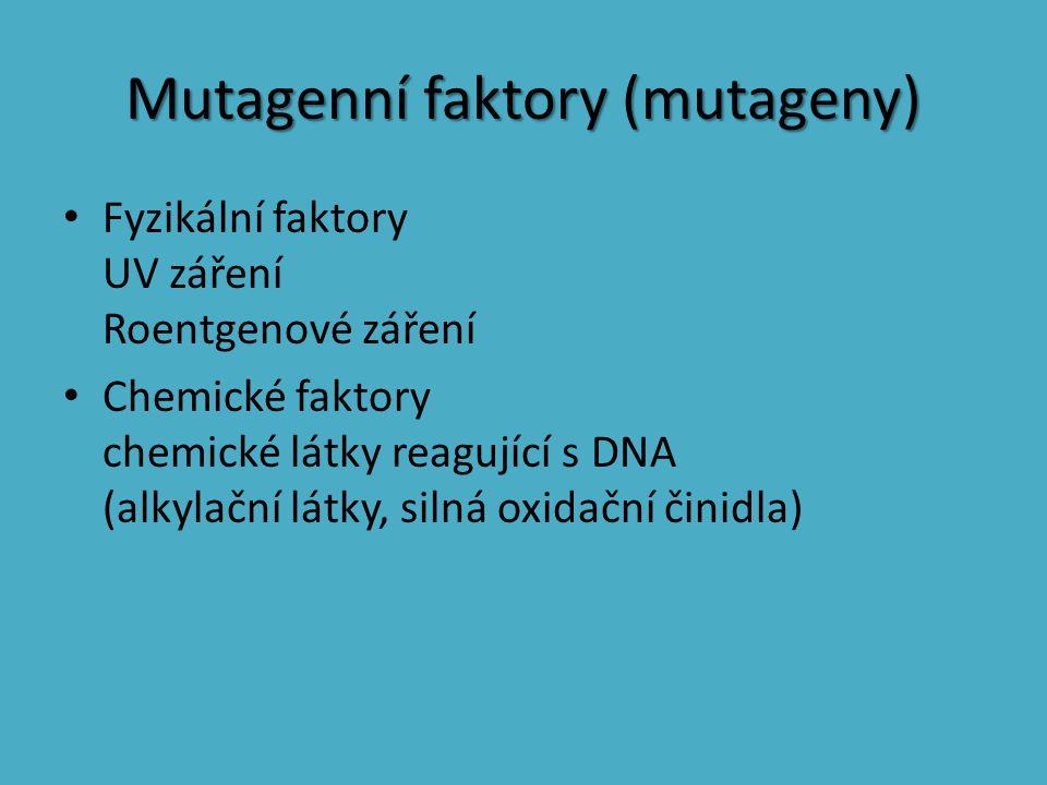 Mutagenní faktory (mutageny) Fyzikální faktory UV záření Roentgenové záření Chemické faktory chemické látky reagující s DNA (alkylační látky, silná ox