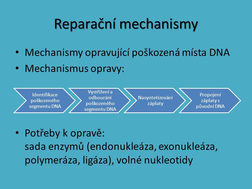 Reparační mechanismy Mechanismy opravující poškozená místa DNA Mechanismus opravy: Potřeby k opravě: sada enzymů (endonukleáza, exonukleáza, polymeráz