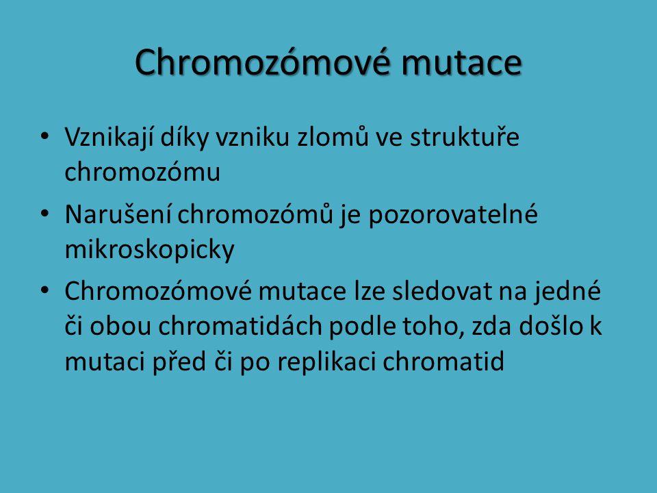 Chromozómové mutace Vznikají díky vzniku zlomů ve struktuře chromozómu Narušení chromozómů je pozorovatelné mikroskopicky Chromozómové mutace lze sled