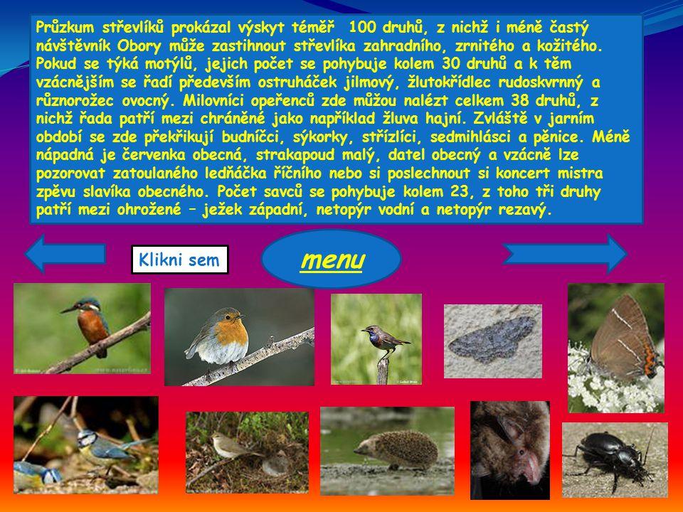 Průzkum střevlíků prokázal výskyt téměř 100 druhů, z nichž i méně častý návštěvník Obory může zastihnout střevlíka zahradního, zrnitého a kožitého. Po