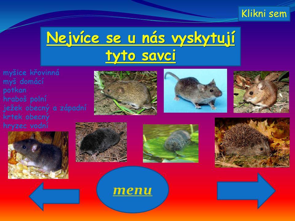 Nejvíce se u nás vyskytují tyto savci myšice křovinná myš domácí potkan hraboš polní ježek obecný a západní krtek obecný hryzec vodní menu Klikni sem