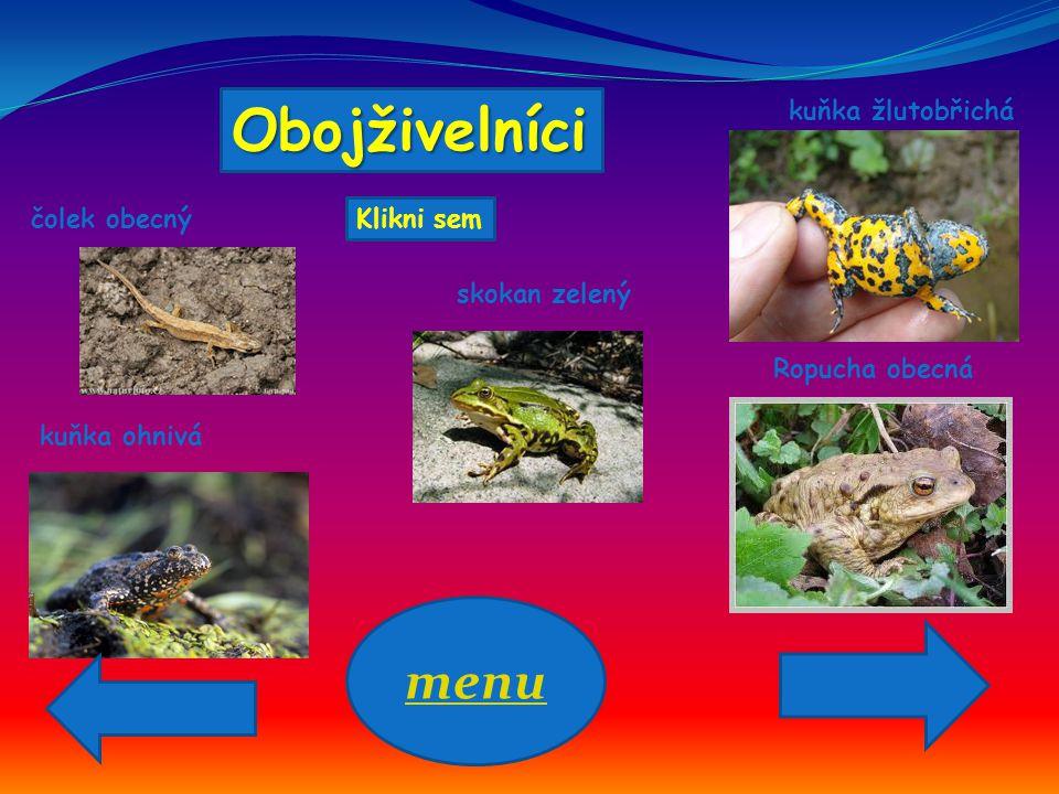 Obojživelníci čolek obecný kuňka ohnivá kuňka žlutobřichá skokan zelený Ropucha obecná menu Klikni sem