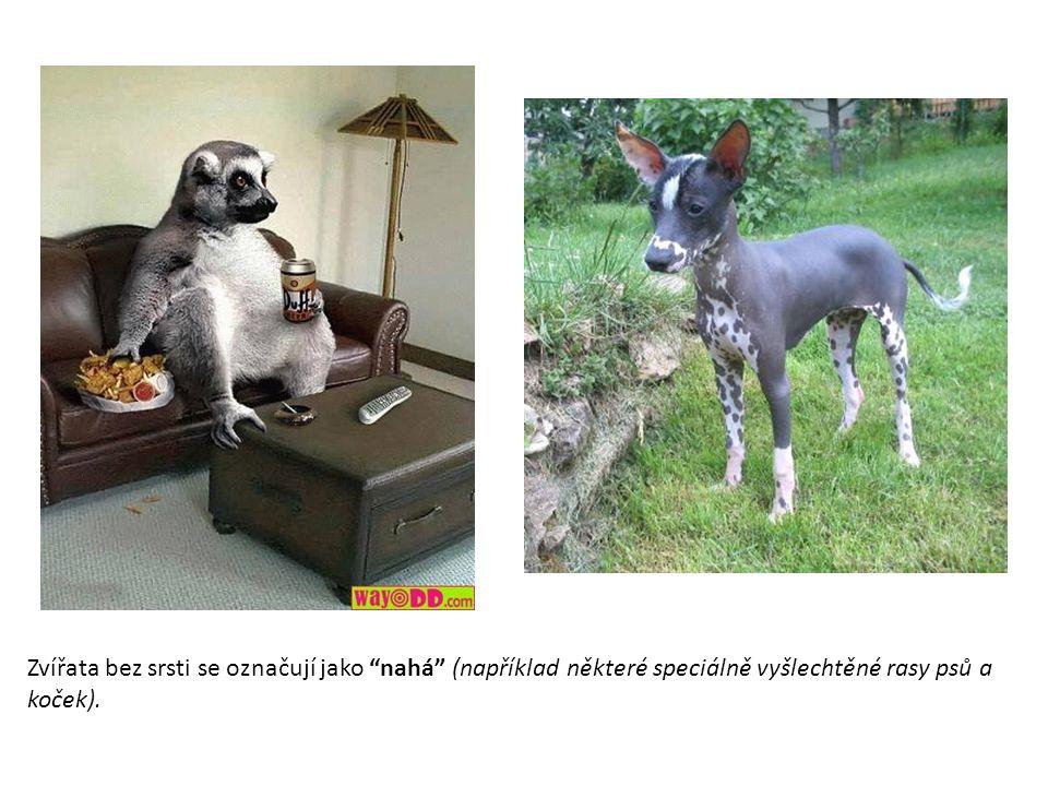 """Zvířata bez srsti se označují jako """"nahá"""" (například některé speciálně vyšlechtěné rasy psů a koček)."""
