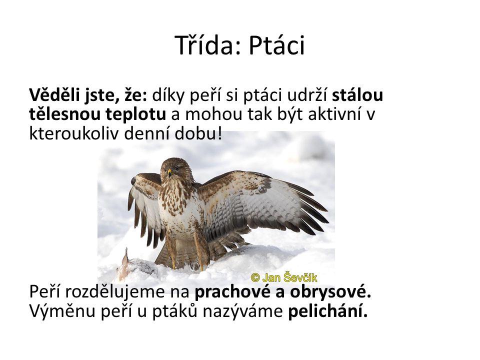 Třída: Ptáci Věděli jste, že: díky peří si ptáci udrží stálou tělesnou teplotu a mohou tak být aktivní v kteroukoliv denní dobu! Peří rozdělujeme na p