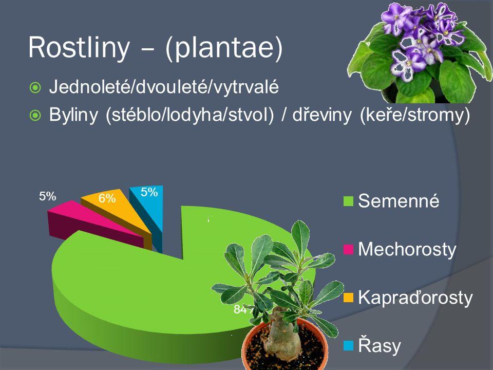 Rostliny – (plantae)  Jednoleté/dvouleté/vytrvalé  Byliny (stéblo/lodyha/stvol) / dřeviny (keře/stromy)