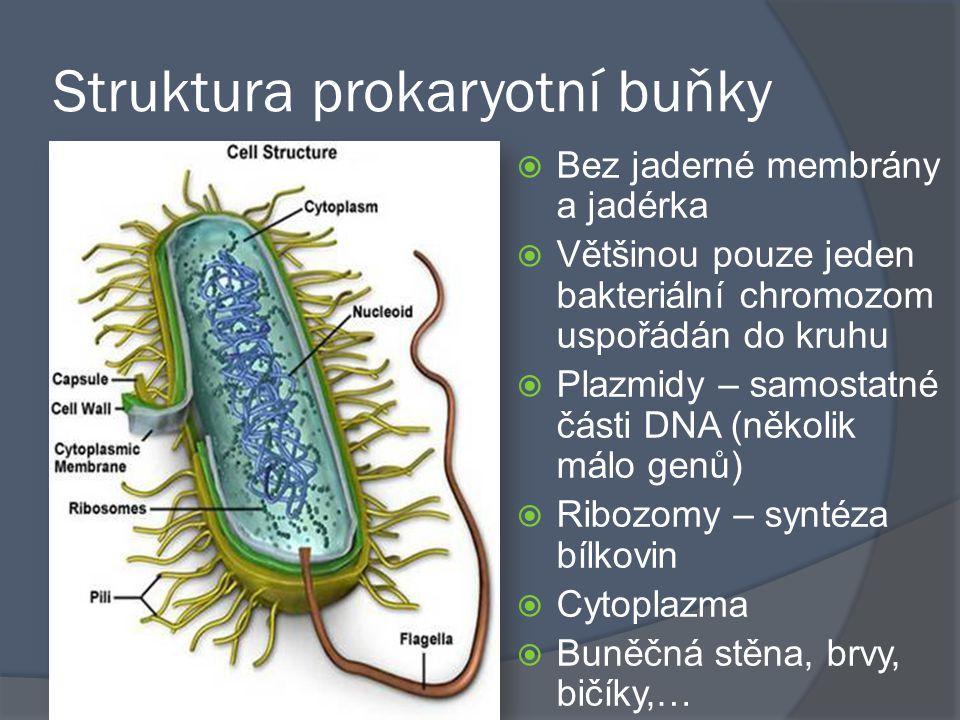Struktura prokaryotní buňky  Bez jaderné membrány a jadérka  Většinou pouze jeden bakteriální chromozom uspořádán do kruhu  Plazmidy – samostatné č