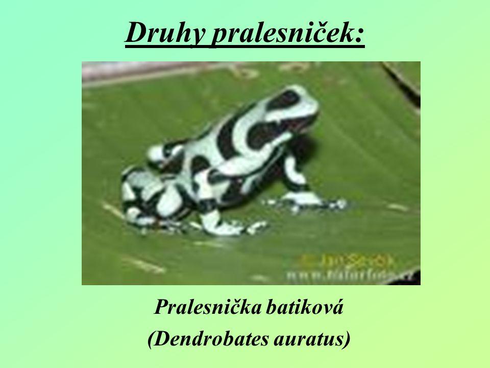 Druhy pralesniček: Pralesnička batiková (Dendrobates auratus)