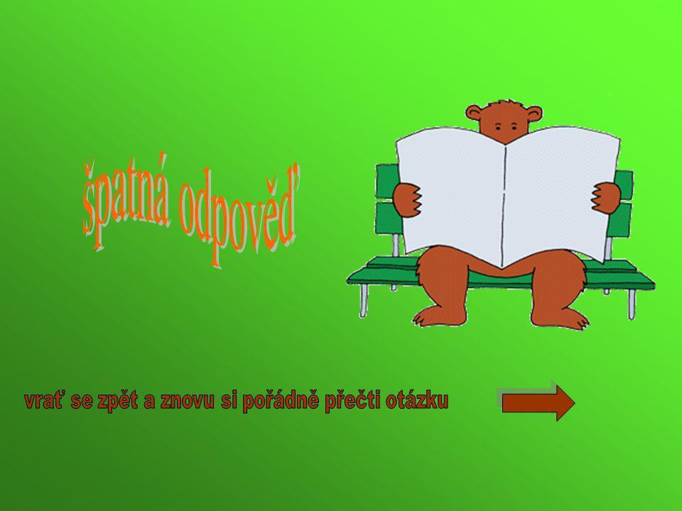 Dospělý medvěd je