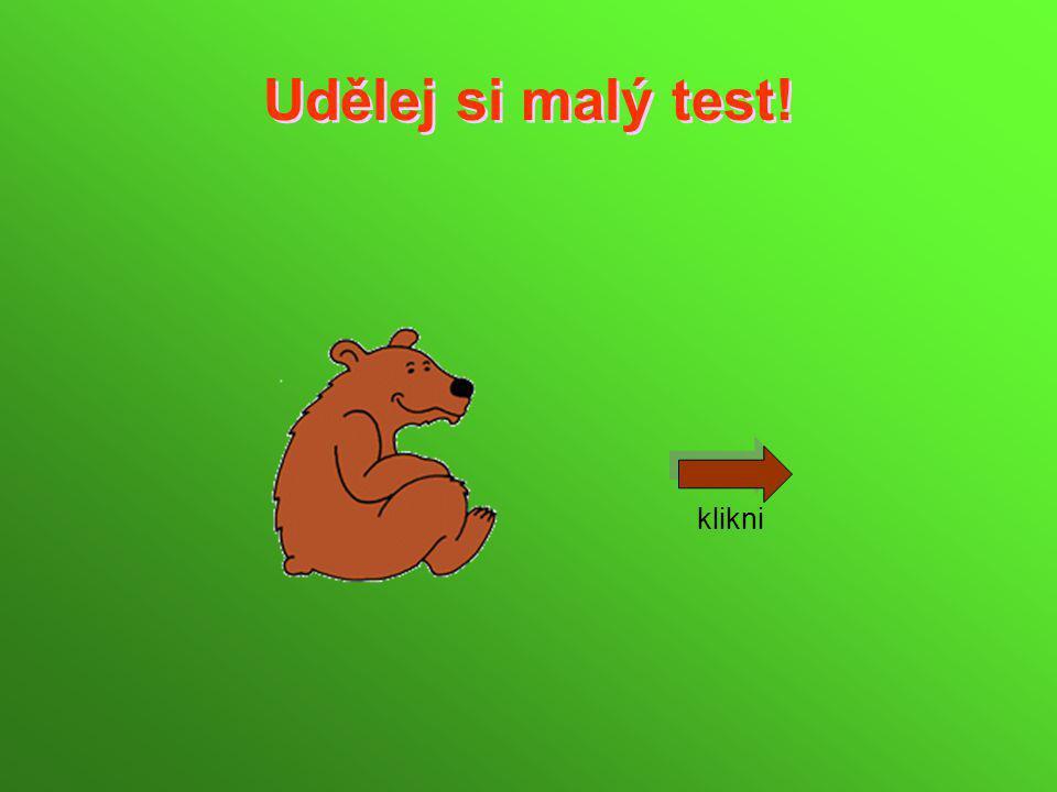 Je nás více druhů, mezi medvědovité šelmy patří např. medvěd grizzly, medvěd kodiak nebo také medvěd lední.