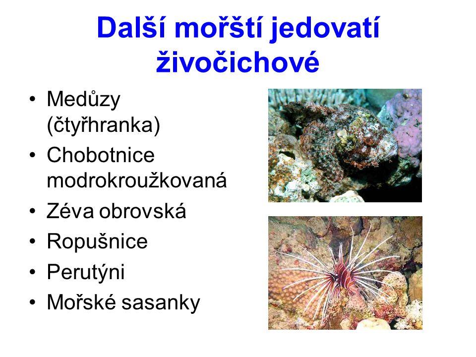 Další mořští jedovatí živočichové Medůzy (čtyřhranka) Chobotnice modrokroužkovaná Zéva obrovská Ropušnice Perutýni Mořské sasanky