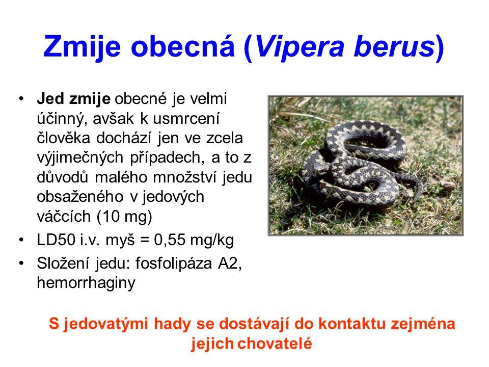 Zmije obecná (Vipera berus) Jed zmije obecné je velmi účinný, avšak k usmrcení člověka dochází jen ve zcela výjimečných případech, a to z důvodů maléh