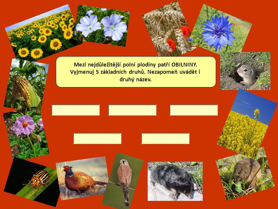 Otázky na závěr Jak nazýváme plané rostliny, které ubírají živiny hospodářským rostlinám na poli.