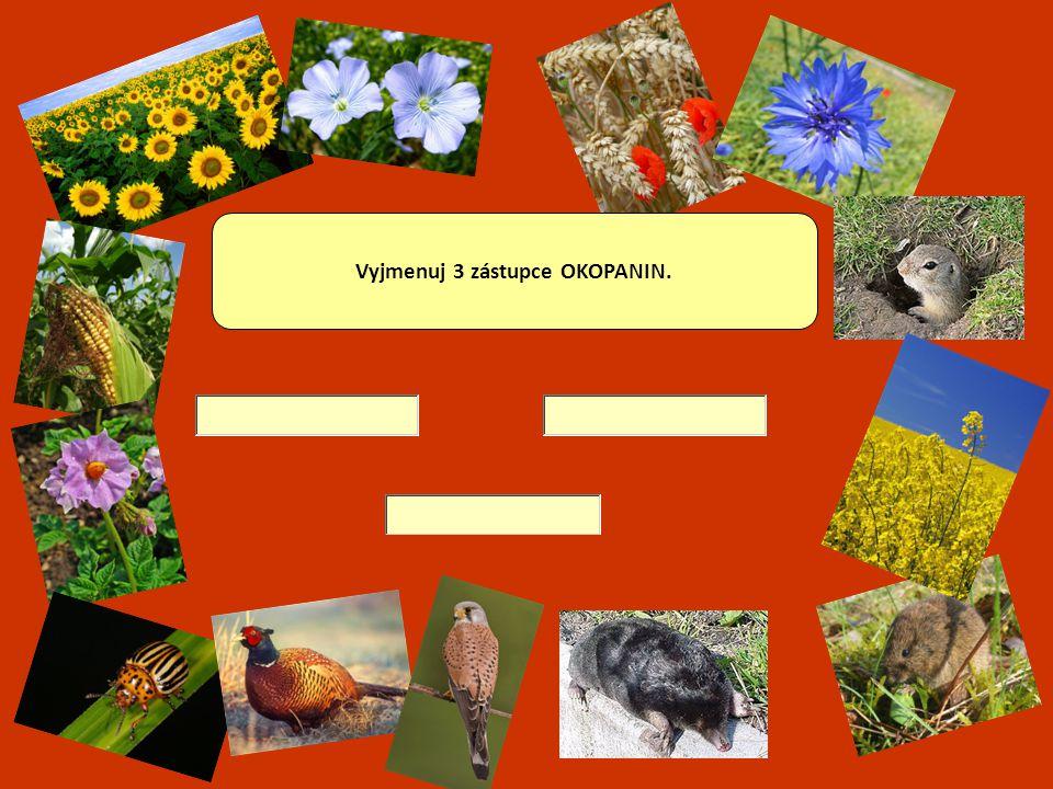 LUSKOVINY – jejich plodem je lusk, ve kterém jsou ukryta semena.
