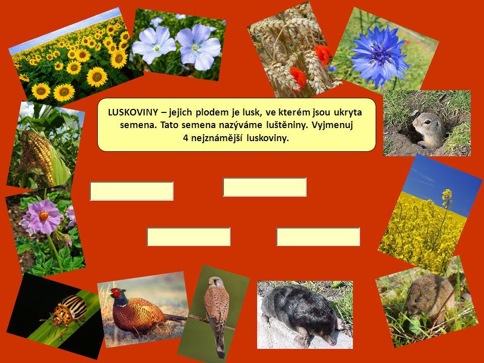 OLEJNINY jsou rostliny, z jejichž semen se lisováním získává olej. Napiš dva nejznámější druhy.