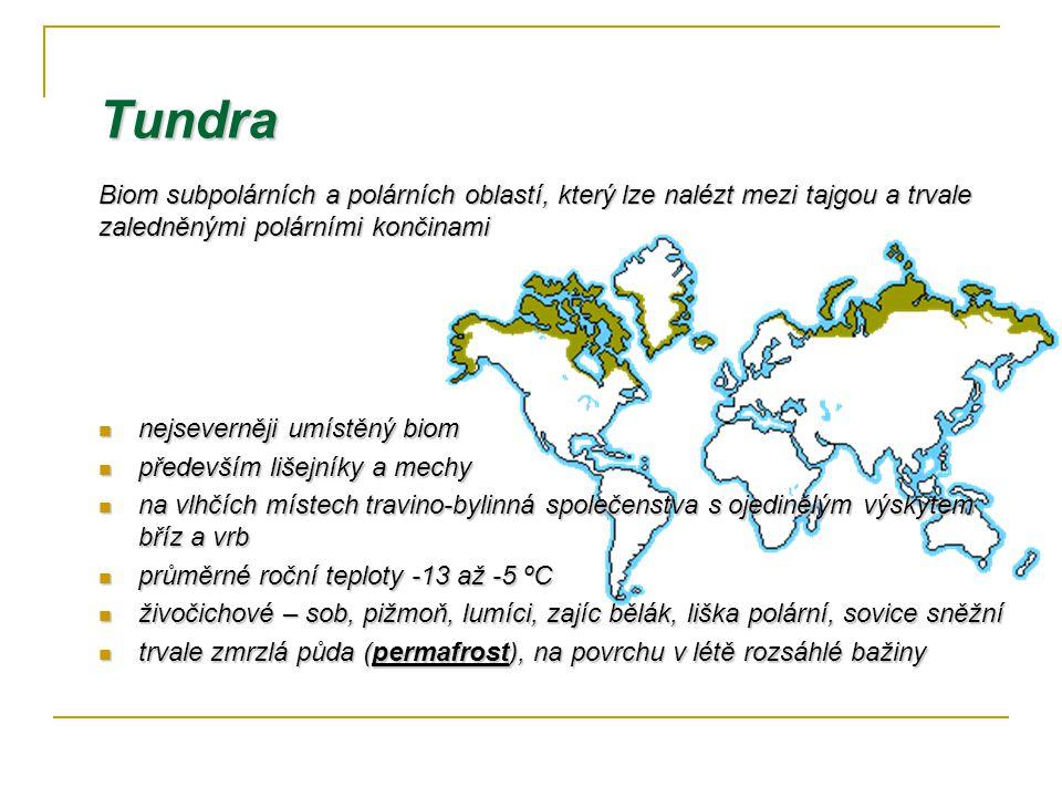 Tundra nejseverněji umístěný biom nejseverněji umístěný biom především lišejníky a mechy především lišejníky a mechy na vlhčích místech travino-bylinn