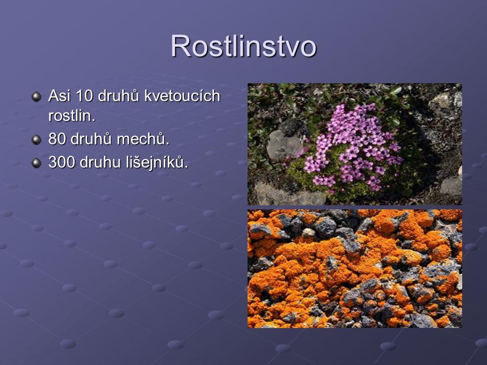Rostlinstvo Asi 10 druhů kvetoucích rostlin. 80 druhů mechů. 300 druhu lišejníků.