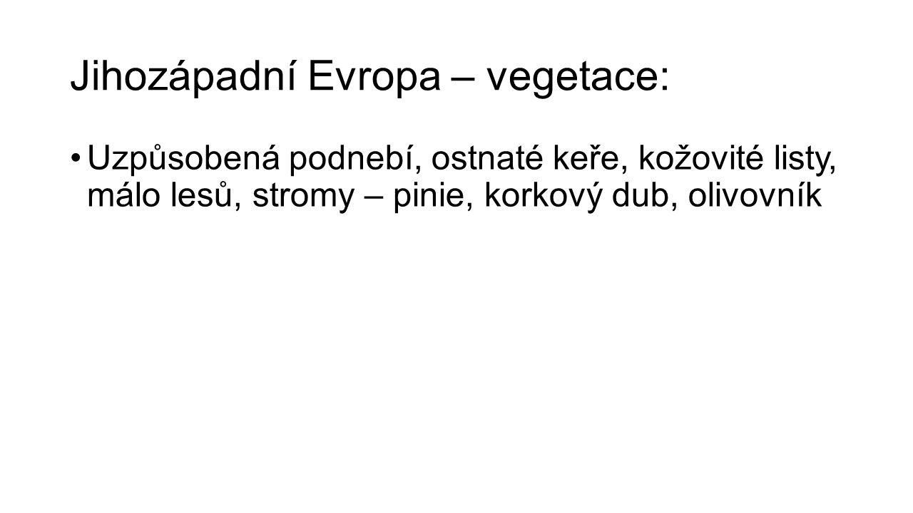 Jihozápadní Evropa – vegetace: Uzpůsobená podnebí, ostnaté keře, kožovité listy, málo lesů, stromy – pinie, korkový dub, olivovník