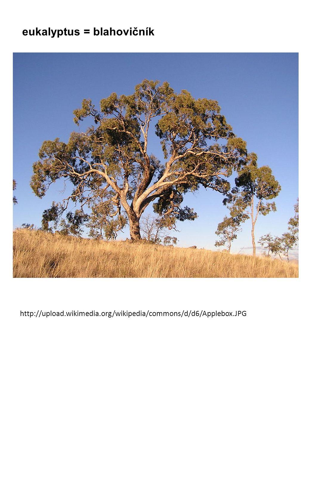 eukalyptus = blahovičník http://upload.wikimedia.org/wikipedia/commons/d/d6/Applebox.JPG